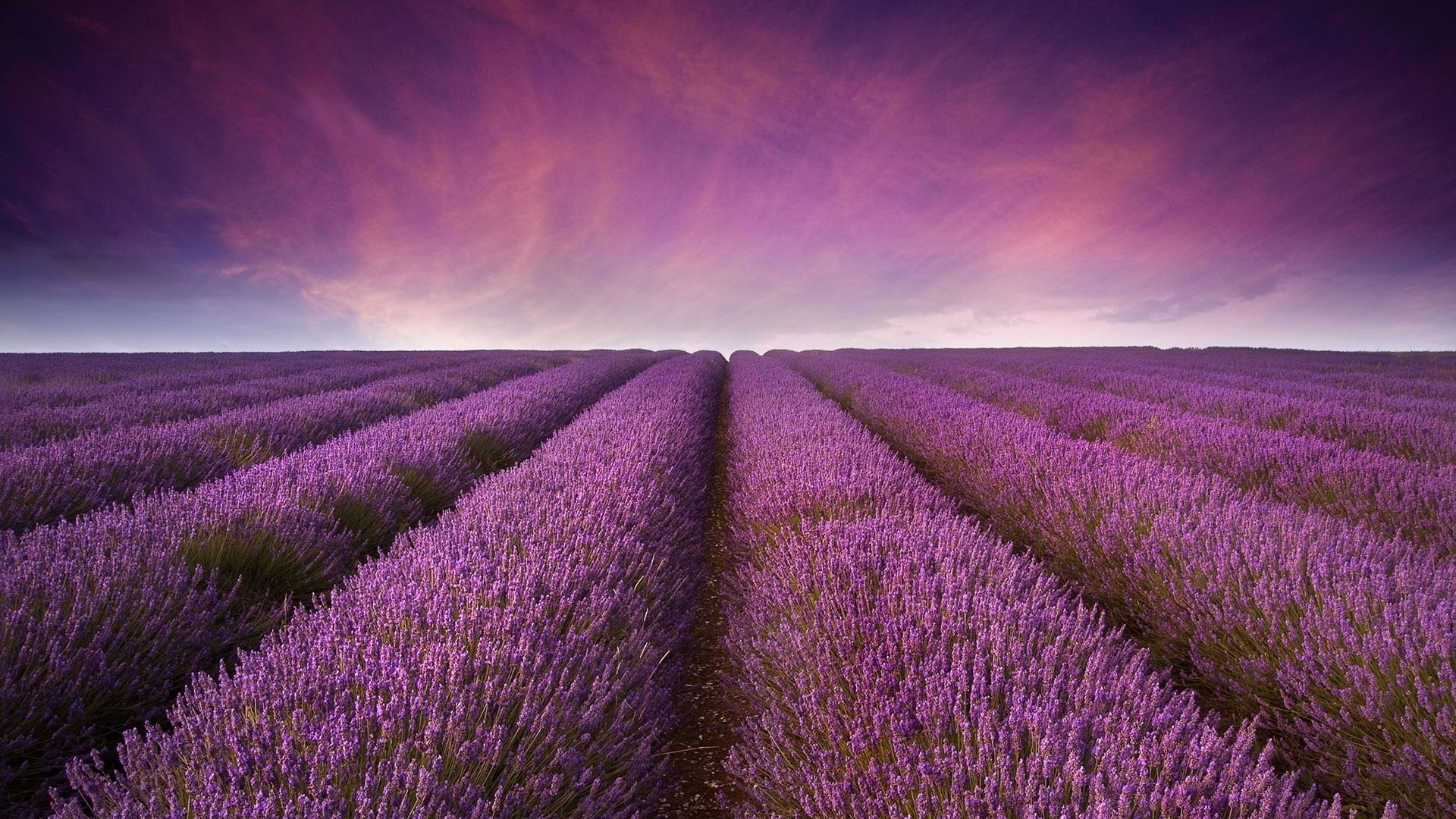 twilight-homes-lavender-estates